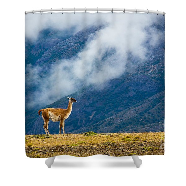 Guanaco Mother And Child Shower Curtain