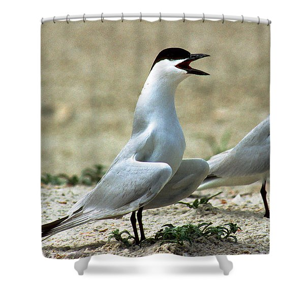 Gull-billed Terns Sterna Nilotica Shower Curtain