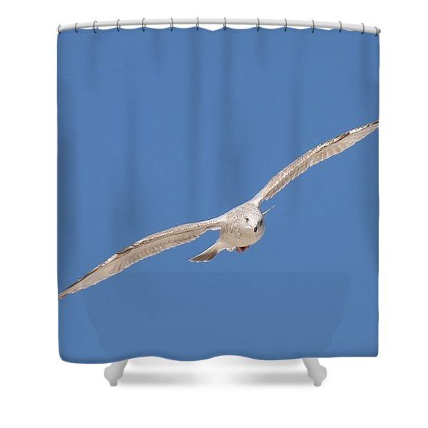 Gull In Flight - 2 Shower Curtain