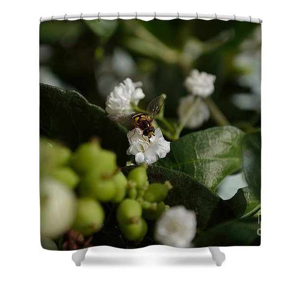Shower Curtain featuring the photograph Gypsophilia Hover Fly by Scott Lyons