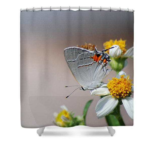 Hairstreak Shower Curtain