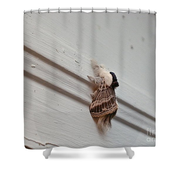 Hairy Russian Moth Shower Curtain