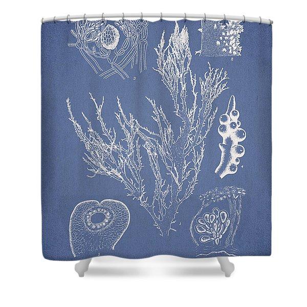 Halymenia Formosa And Eucheuma Spinosum Shower Curtain