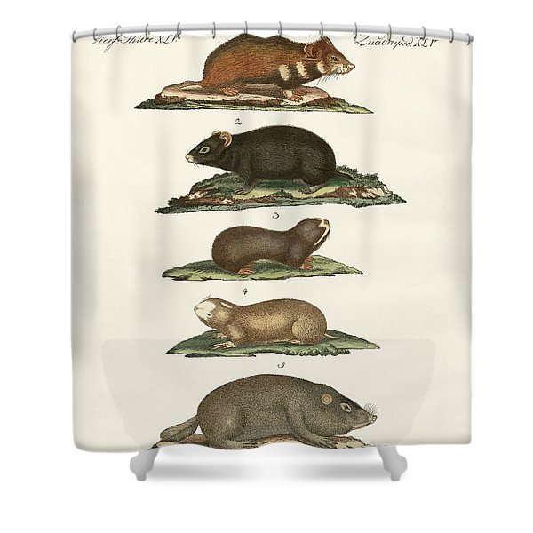 Hamsters And Field Voles Shower Curtain