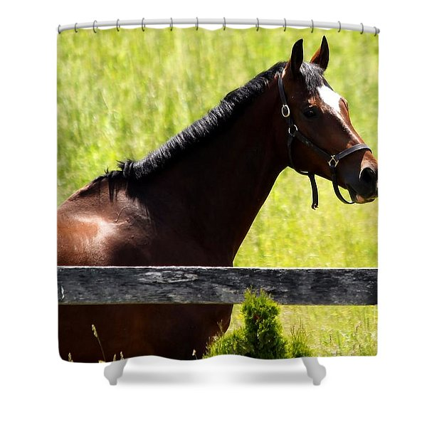Handsom Horse Shower Curtain