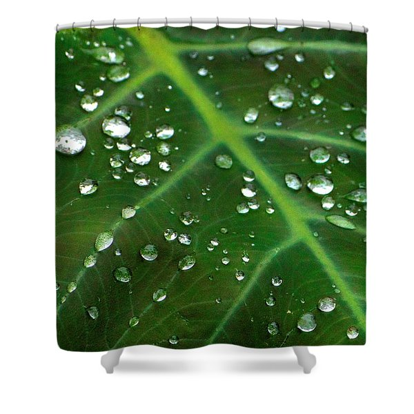 Hanging Droplets Shower Curtain