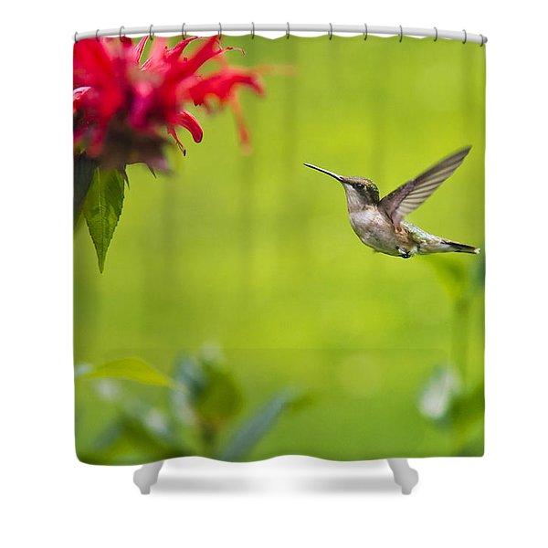 Happiness Hummingbird Garden Shower Curtain