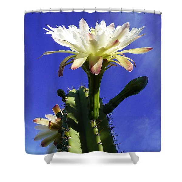 Happy Birthday Card And Print 16 Shower Curtain