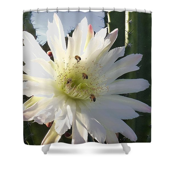 Happy Birthday Card And Print 9 Shower Curtain