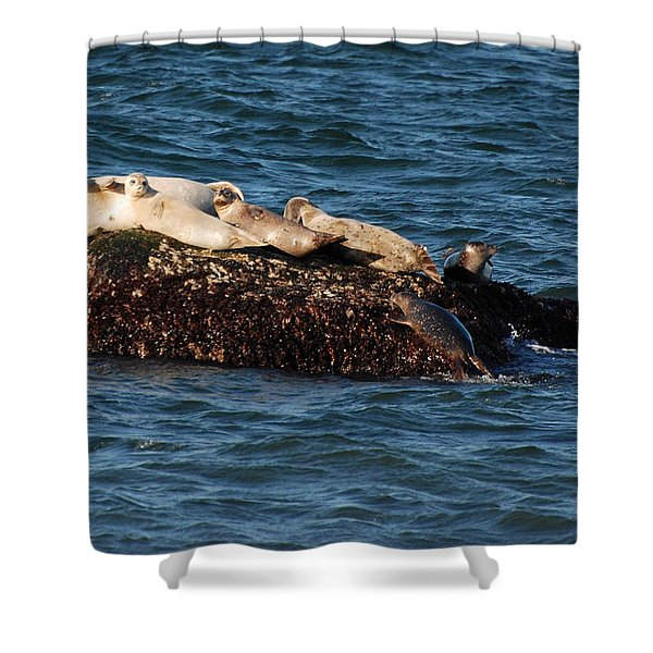 Harbor Seals Hauled Out Shower Curtain