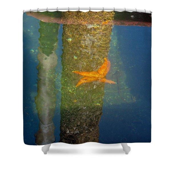 Harbor Star Fish Shower Curtain