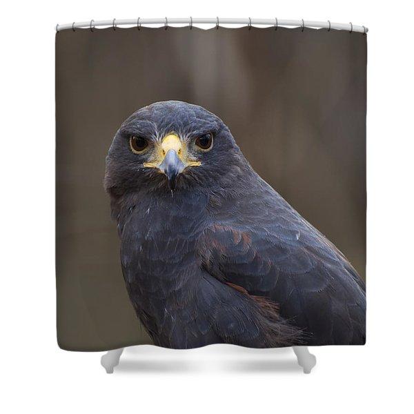 Harris Hawk Shower Curtain