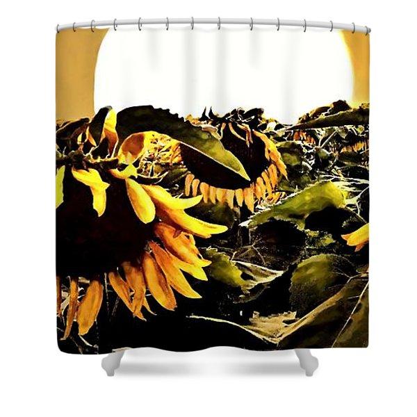Harvest Moon Over A Sunflower Farm Shower Curtain