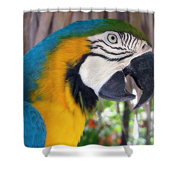 Harvey The Parrot 2 Shower Curtain