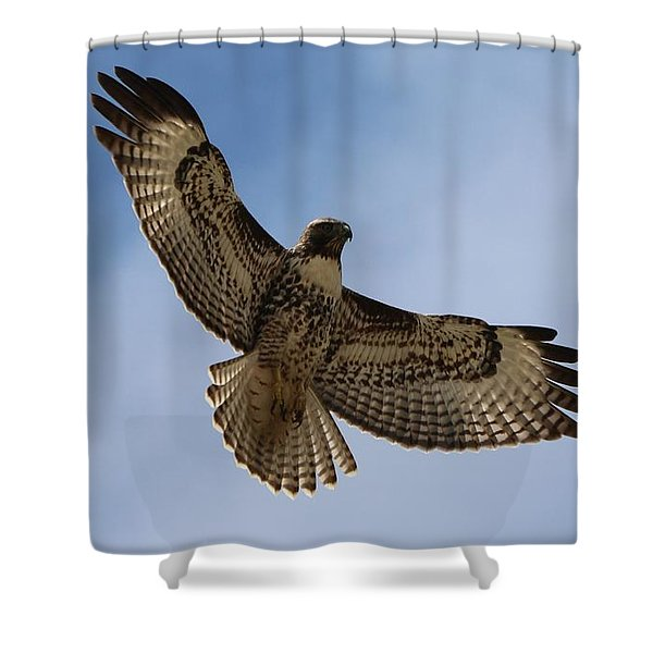 Hawk In Flight  Shower Curtain