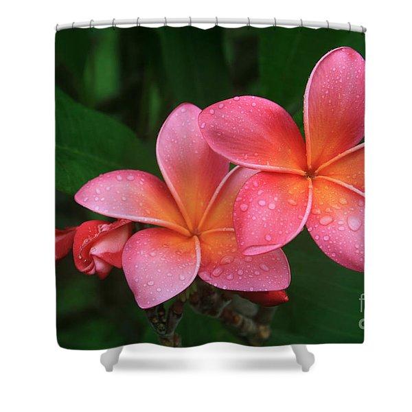 He Pua Laha Ole Hau Oli Hau Oli Oli Pua Melia Hae Maui Hawaii Tropical Plumeria Shower Curtain