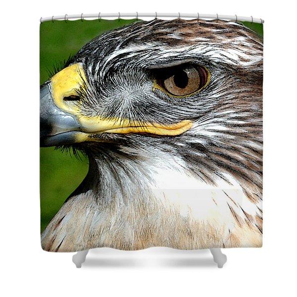 Head Portrait Of A Eagle Shower Curtain