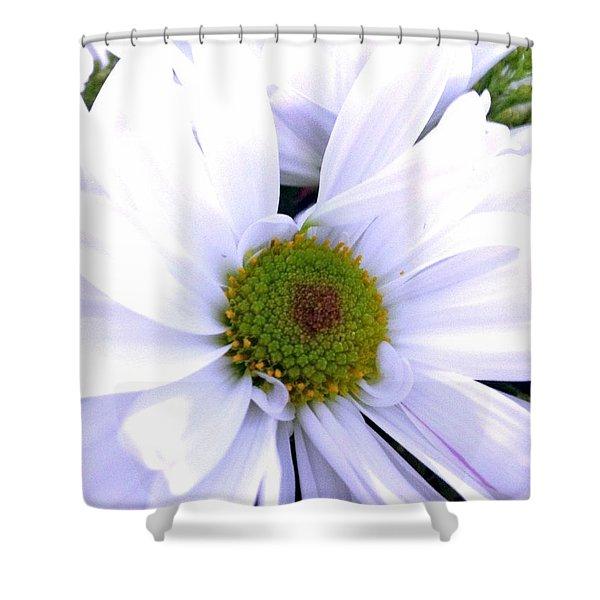Heart Of The Daisy Shower Curtain