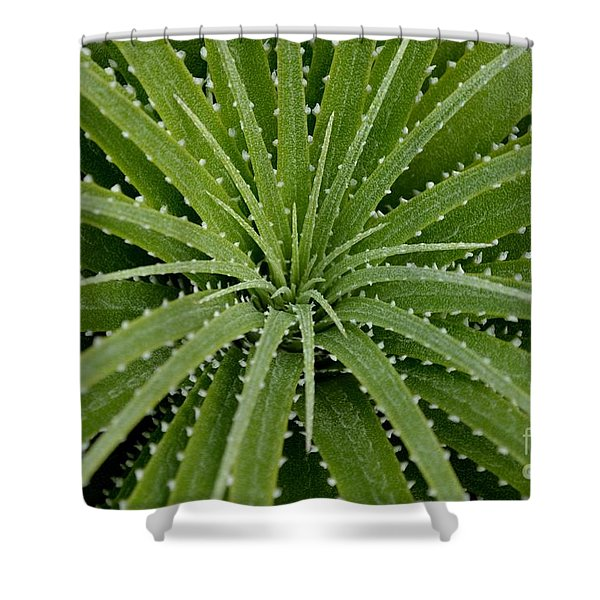 Shower Curtain featuring the photograph Hechtia Argentea by Scott Lyons