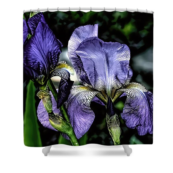 Heirloom Purple Iris Blooms Shower Curtain