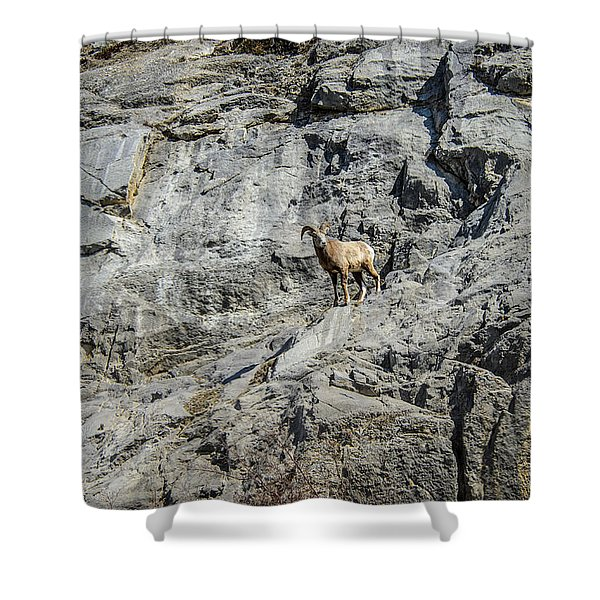 Big Horn Sheep Coming Down The Mountain  Shower Curtain