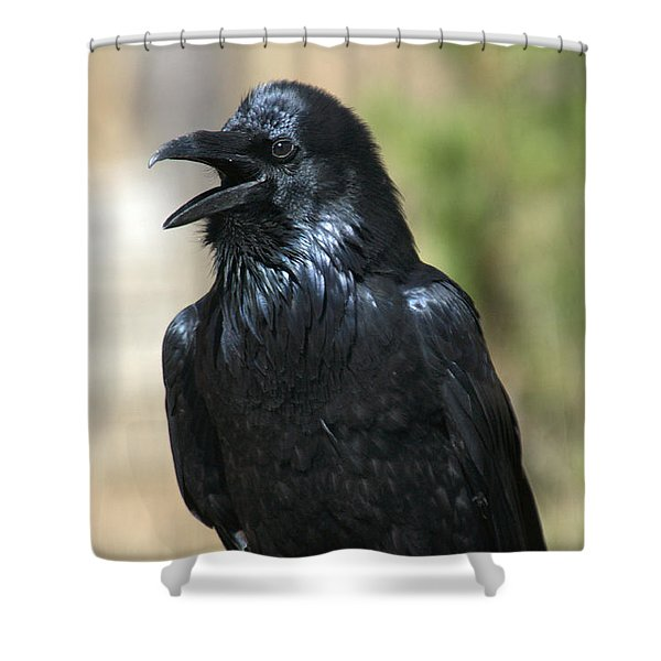 Hello.  Welcome Shower Curtain