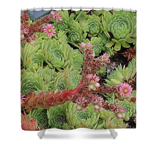 Hen And Chick In Bloom Shower Curtain
