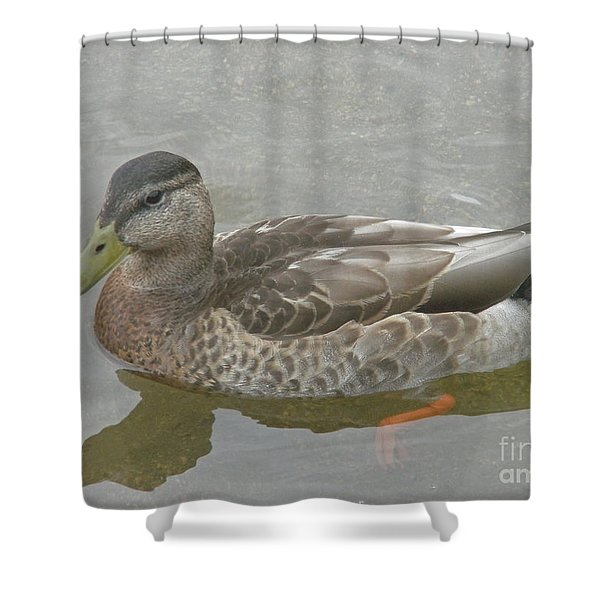 Hen Party Shower Curtain