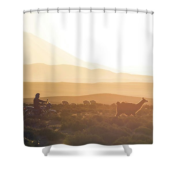 Herd Of Llamas Lama Glama In A Desert Shower Curtain