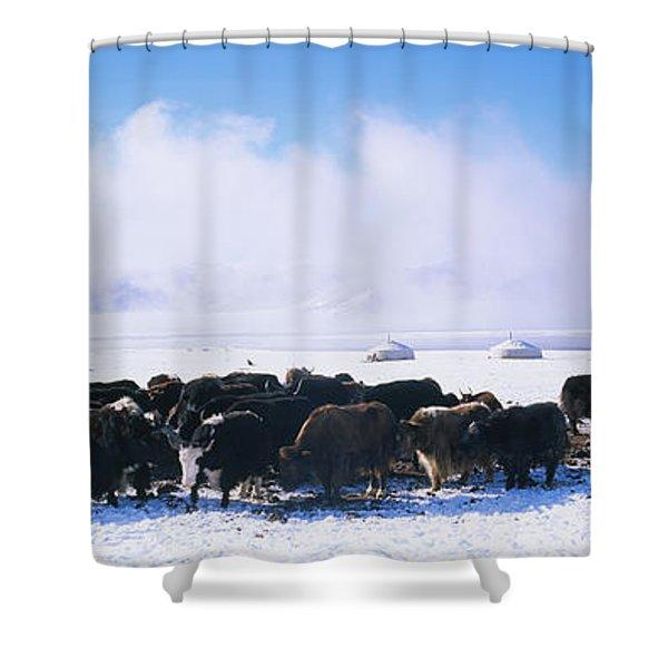 Herd Of Yaks On A Polar Landscape Shower Curtain