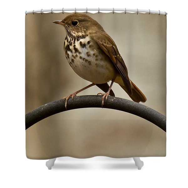 Shower Curtain featuring the photograph Hermit Thrush by Robert L Jackson