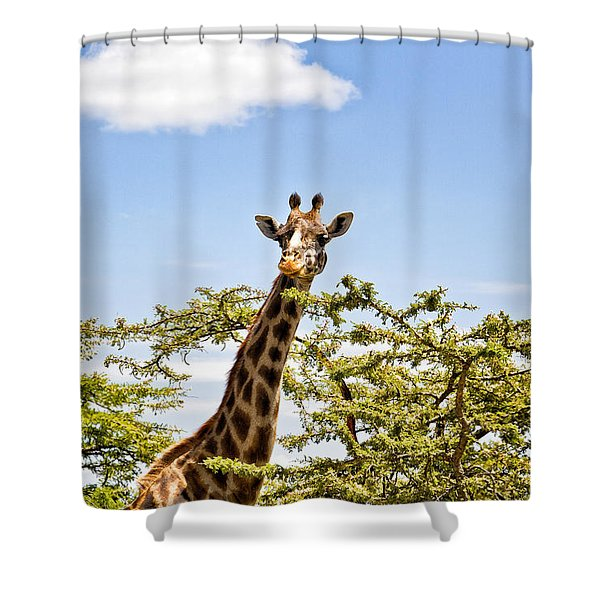 Shower Curtain featuring the photograph Hey You by Perla Copernik