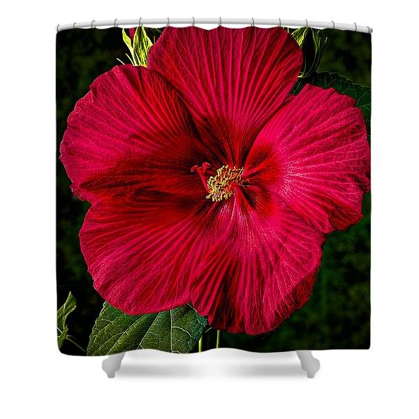 Hibiscus Portrait Shower Curtain