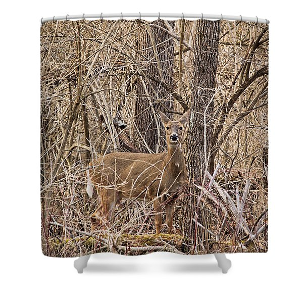 Hiding Out Shower Curtain