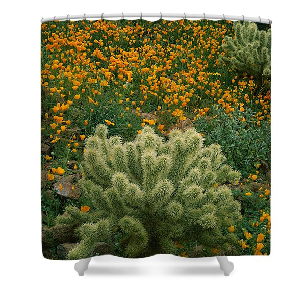 High Angle View Of Mexican Gold Poppies Shower Curtain