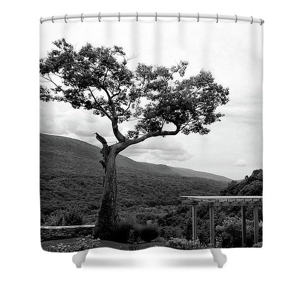Hildene Tree 5689 Shower Curtain
