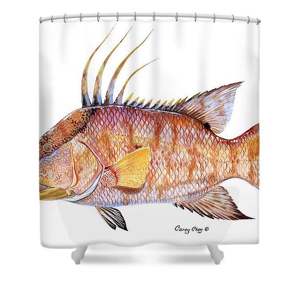 Hog Fish Shower Curtain