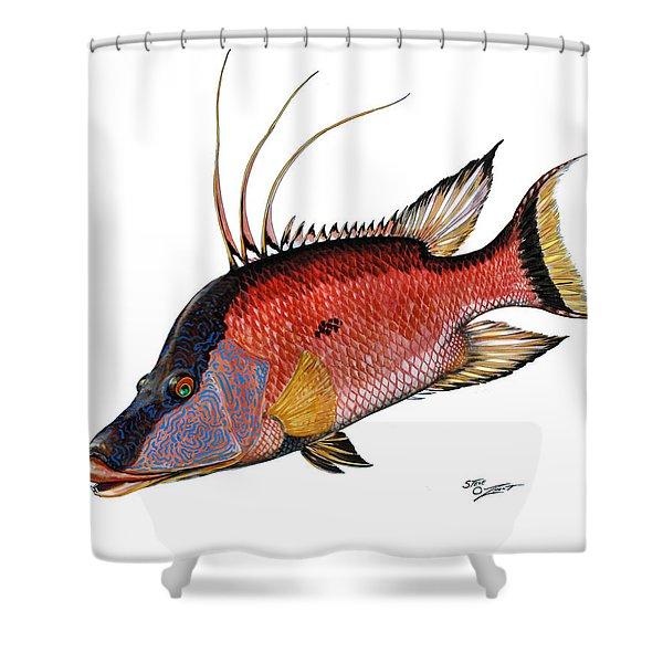 Hogfish On White Shower Curtain