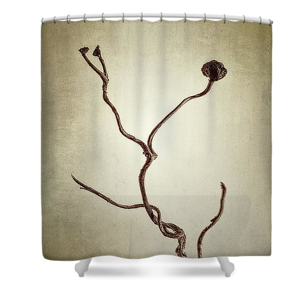 Holdfast Rootlet Shower Curtain