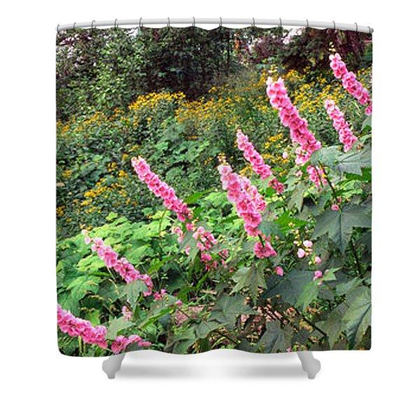 Hollyhock Alcea Rosea Flowers Shower Curtain