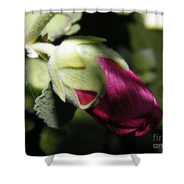 Hollyhock Shadows Shower Curtain