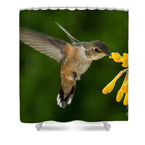 Honeysuckle Lunch Shower Curtain