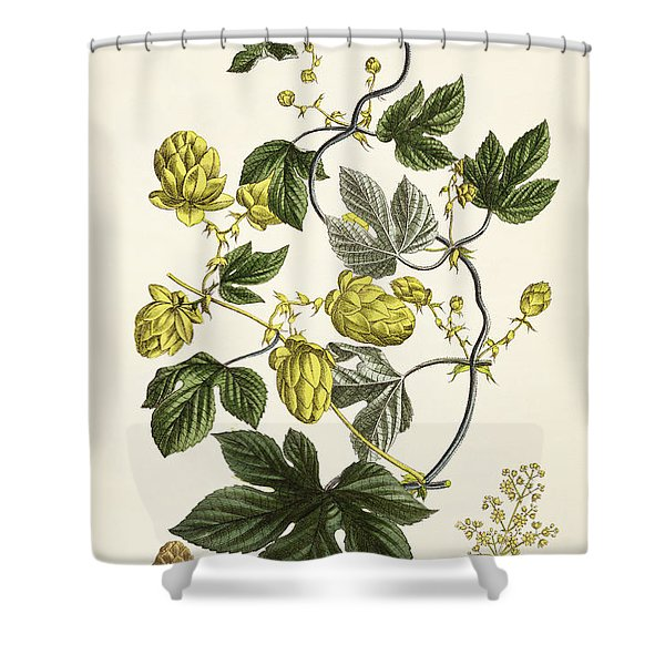 Hop Vine From The Young Landsman Shower Curtain