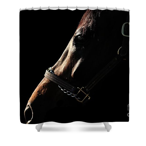 Horse In The Shadows Shower Curtain