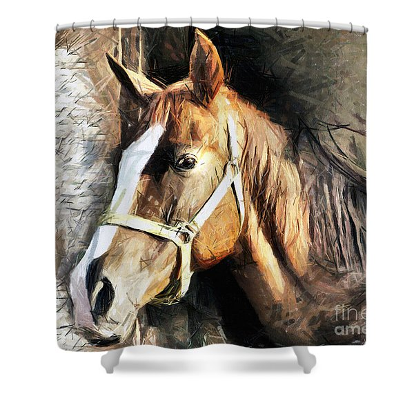 Horse Portrait - Drawing Shower Curtain
