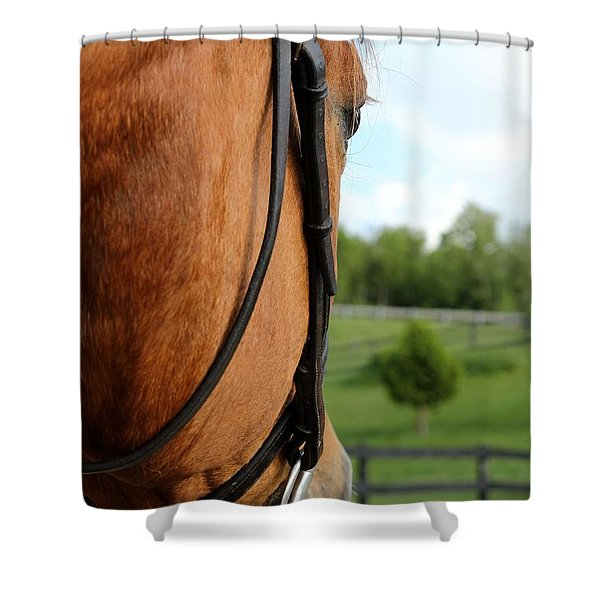 Horse View Shower Curtain