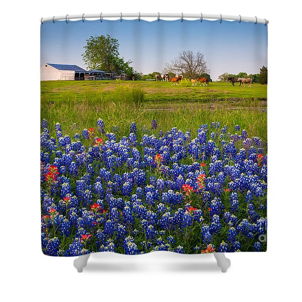 Horses Coming Home Shower Curtain
