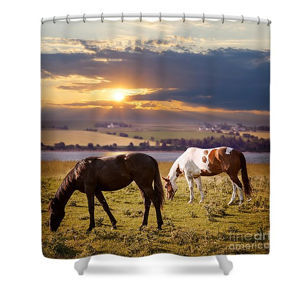 Horses Grazing At Sunset Shower Curtain