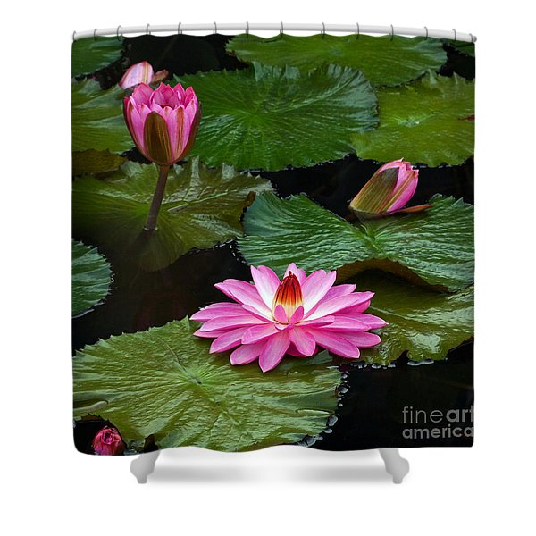 Hot Pink And Green Tropical Waterlilies Shower Curtain