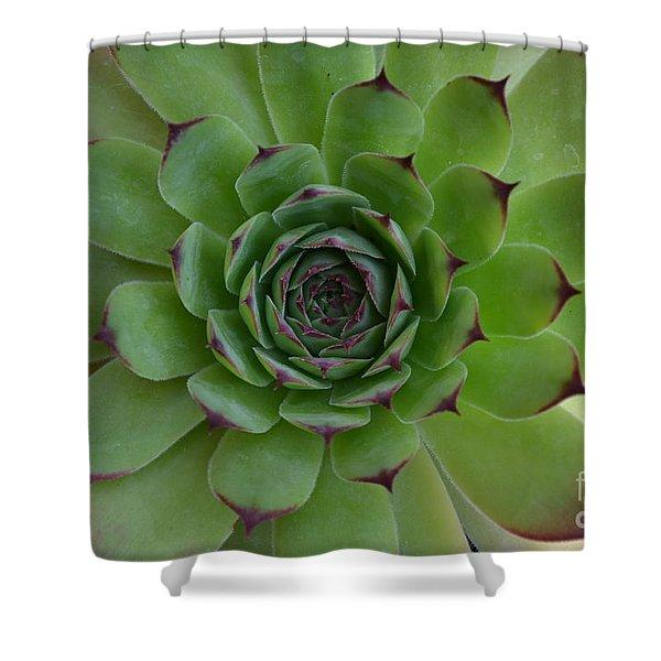 Shower Curtain featuring the photograph Houseleek Sempervivum by Scott Lyons